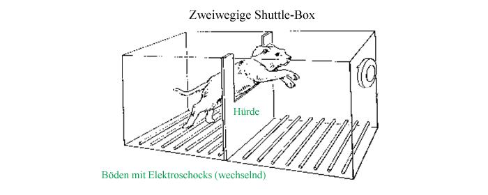 zweiwegige-shuttle-box-seligman-gelernte-hilflosigkeit